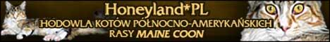 Hodowla kotów rasy MAINE COON Honeyland*PL